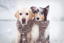Zwei Hunde Sitzen Im Schnee Nebeneinander Mit Schal