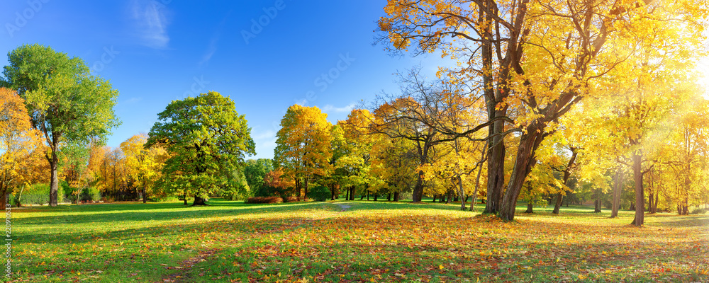 Fototapeta trees with multicolored leaves in the park