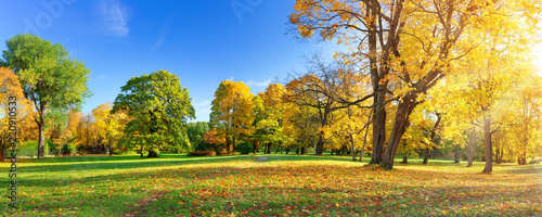 Obraz trees with multicolored leaves in the park - fototapety do salonu