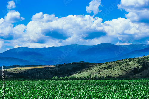 Fotobehang Landschap A corn field, mountain landscape on the background.