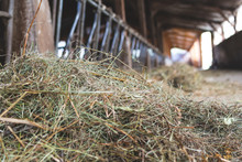 Cowshed For Cows- Agriculture ...
