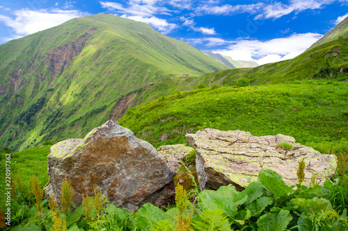 Foto op Plexiglas Olijf View of overgrown with fresh green grass stone in Caucasian mountains, Sochi, Russia