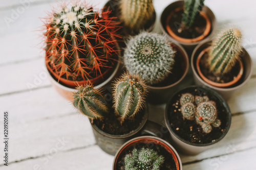 Cactus background on wooden table