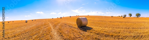 hay bales landscape of yellow grass fields under blue sky with white clouds, agriculture and nature and relax, climate change concept