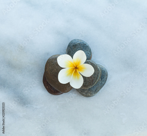 Wall Murals Plumeria Top view of one spa flower and stones on white marble background.