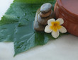 spa objects цшер with big green leaves for massage treatment