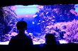 canvas print picture - kids-boy and girl- watching fishes in aquarium