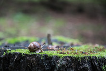 Snail On Mossy Stump