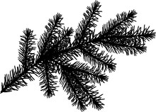 Black Fir Branch With Lot Of Needles