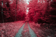 Chemin Forestier En Infrarouge