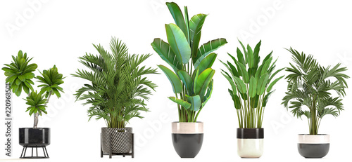 Fotoposter Planten collection of ornamental plants in pots
