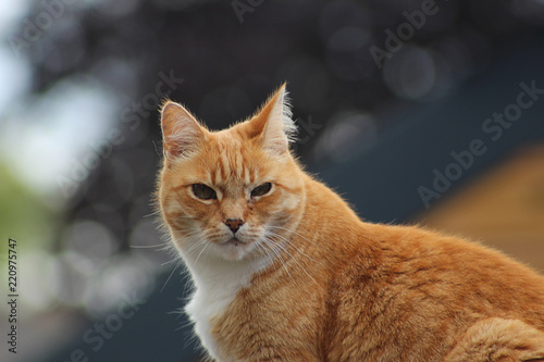 Photo Stands Tiger Rode kater