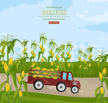 Truck With Corn Harvest Vector. Maize Fields Autumn Season Illustrations