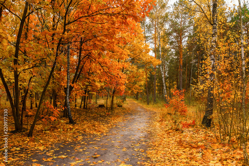Fototapety, obrazy: autumn sketches. landscape. autumn colors.