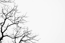Silhouette Of A Leafless Tree Isolated On White Background