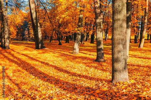 Fall picturesque landscape. Desiduous fall tree with fallen fall leaves lit by sunshine