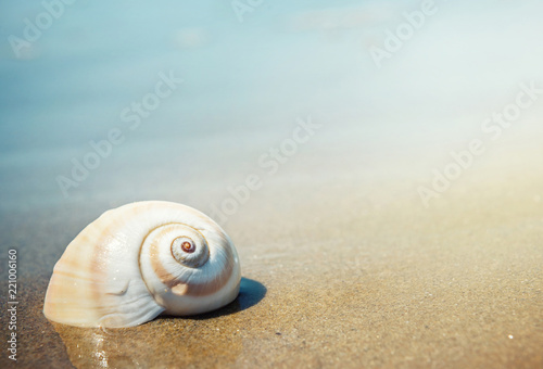 Keuken foto achterwand Oceanië Sea shell on the sea and sandy beach blurred background. Write Your Text Here.