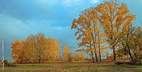 Deurstickers Bomen beautiful autumn forest landscape, trees with yellow leaves and dark clouds in the sky
