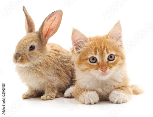 Red cat and rabbit.