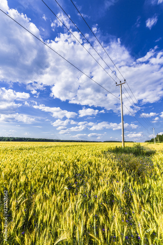 Tuinposter Platteland Cumulus clouds over wheat field