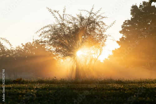 Photo Stands Landscapes Beautiful rays