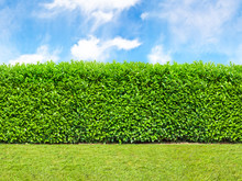 Tall  Bush Hedge With Sky And Grass. Seamless Endless Pattern.
