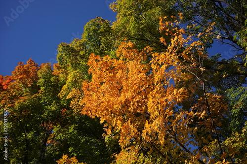 Fotografie, Obraz  Herbst Blätter