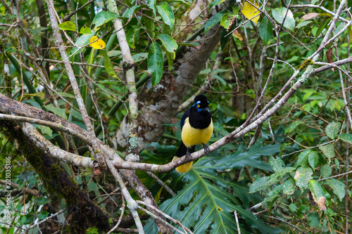 Staande foto Vogel Goldfinch on a branch in the Iguazu National Park