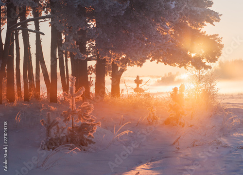 Foto op Aluminium Diepbruine Sunny winter morning