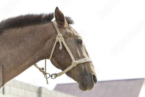 Photo  Portrait of a horse