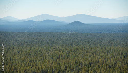 In de dag Khaki Oregon forest stretching to the horizon with mountain outlines in the background.
