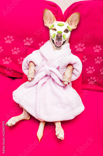 Deurstickers Crazy dog wellness beauty mask spa dog
