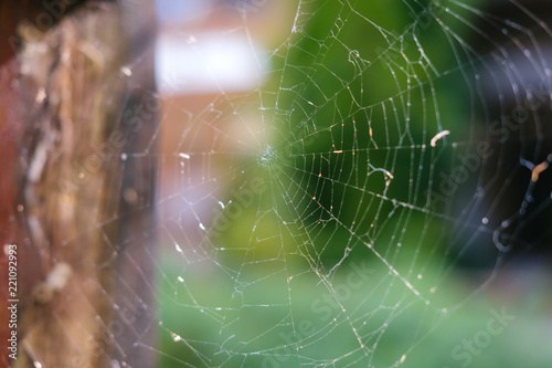 Close-up cobweb at old house with green color of tree in the background