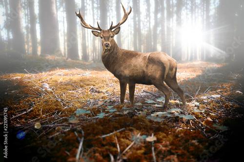 Fotobehang Ree Hirsch im herbstlichen Wald bei Sonneneinfall
