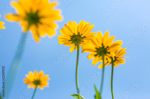 Spoed Foto op Canvas Natuur Spring flowers, beautiful nature concept