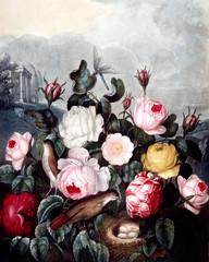 Fototapetaillustration of flower