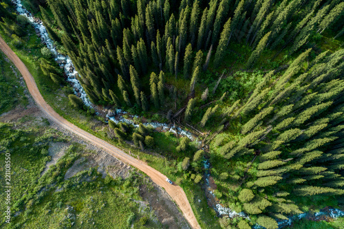 Pine forest from above, spring season, forest road and river #221108550