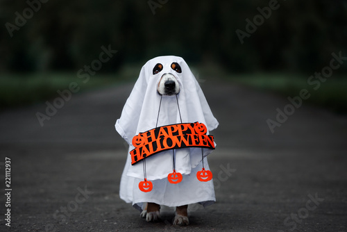 dog in a ghost costume holding a happy halloween sign outdoors at night Fototapet