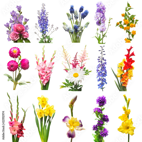 Photo Collection beautiful flowers assorted delphinium, gladiolus, lily, iris, muscari, kerria japonica, daffodil, dahlia and rose