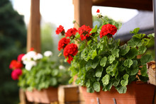 Flower Box With Geranium Flowers On Cottage House Porch