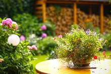 Pot Plant Flowers On The Table On Hydrangea Green Beautiful Garden Background