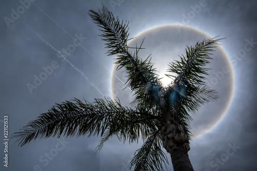 Sun halo creates dazzling circle in Florida sky behind palm tree