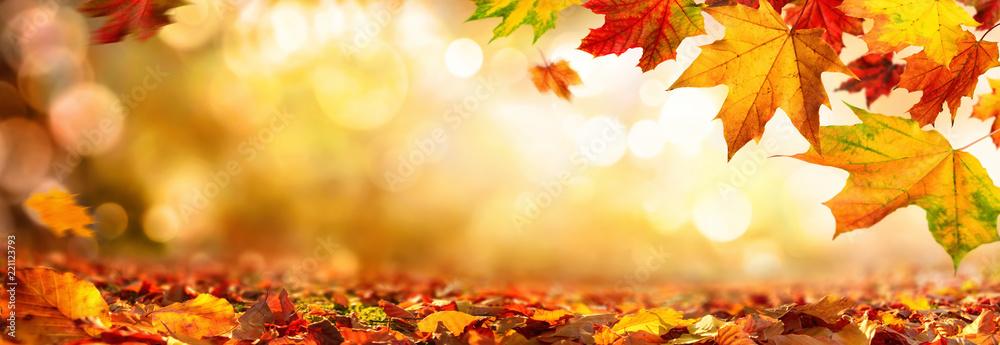 Fototapeta Bunte Blätter im Herbst verzieren einen breiten unscharfen Hintergrund im Wald