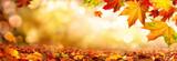 Bunte Blätter im Herbst verzieren einen breiten unscharfen Hintergrund im Wald