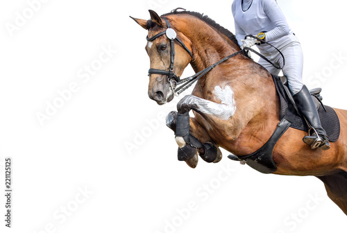 Photo sur Aluminium Equitation Jumping horse with a rider isolated on white background. Show-jumping.