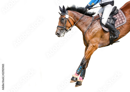 Jumping horse with a rider isolated on white background. Show-jumping.