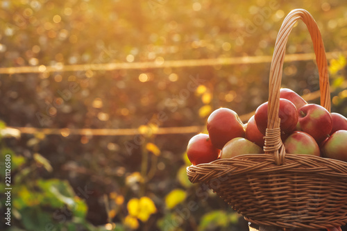 Apples in basket Fototapeta