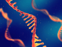 Single Strand Ribonucleic Acid, RNA Research And Therapy