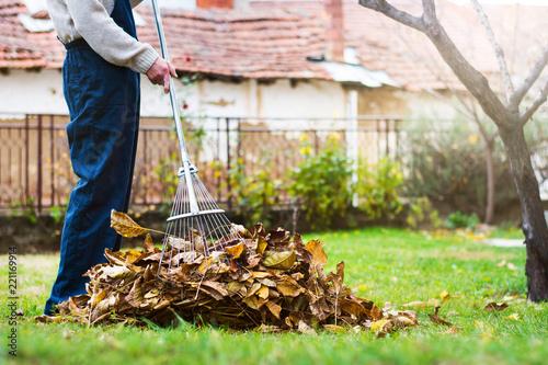 Obraz Man collecting fallen autumn leaves in the yard - fototapety do salonu