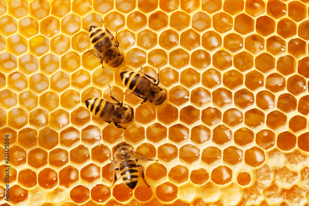 Fototapeta Bees on honeycomb.
